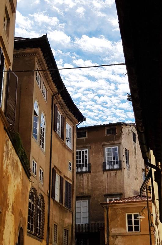 Lucca wbeżu, żółci izłocie