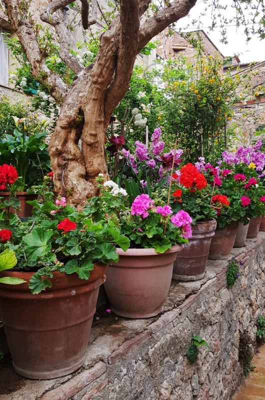 Pienza święto kwiatów