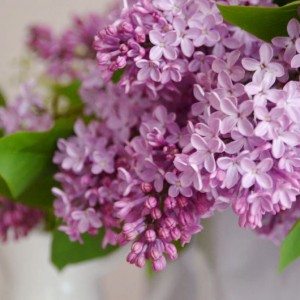 Perfumy o zapachu bzu